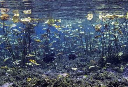 Mergulhador ecologista e meio ambiente